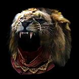 Lion Pelt