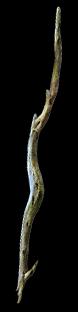 Gnarled Branch
