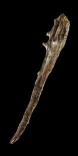 Driftwood Maul